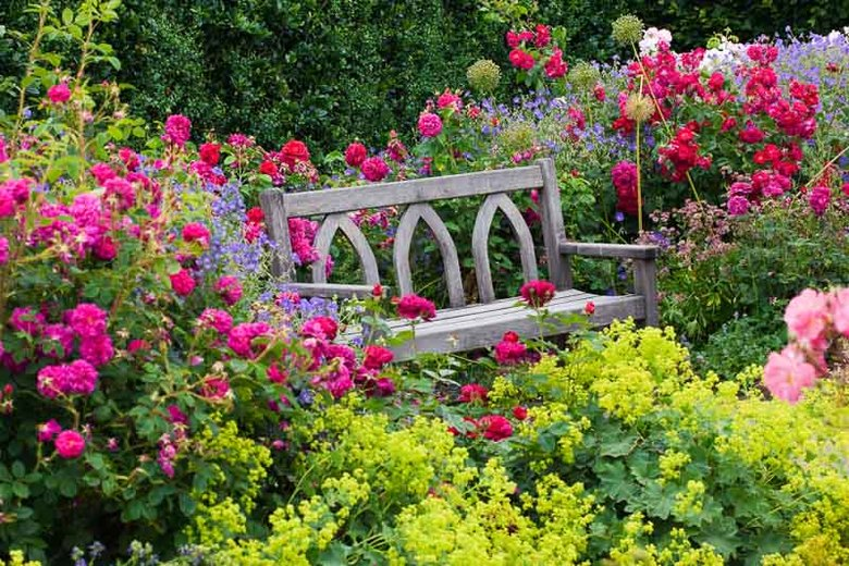 Rosenpflanzung
